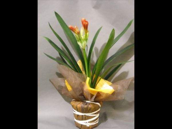 Vente de fleurs en ligne boutique en ligne de plantes et for Vente de fleurs en ligne